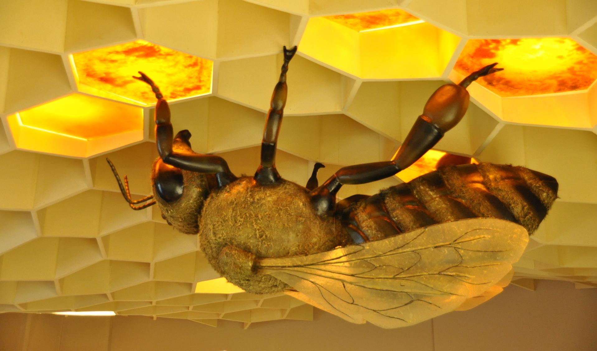 Αποτέλεσμα εικόνας για το μουσείο μέλισσας
